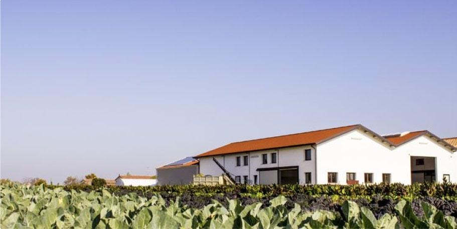 azienda agricola valorizza business essiccatori tauro